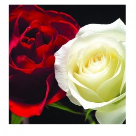 Best greetings Card Roses 13x13 cm